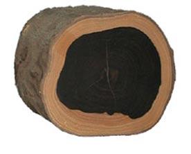 древесина черного дерева